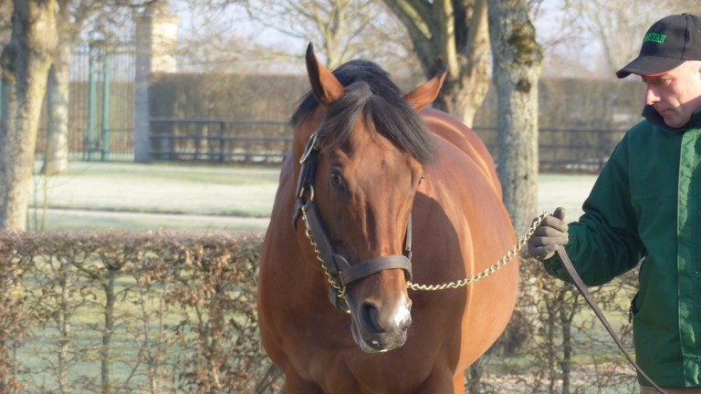 Siyouni on parade at Haras de Bonneval on Saturday