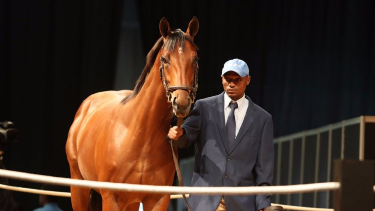 The son of Trippi bought by MV Magnier for R6 million on Saturday