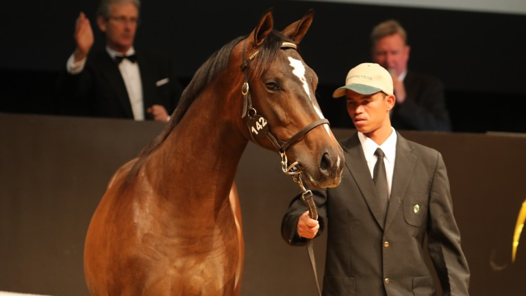 This son of Captain Al was bought by David Redvers for R4.5 million