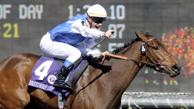 Hall of Fame: Goldikova is one of only two horses to win three times at the Breeders' Cup