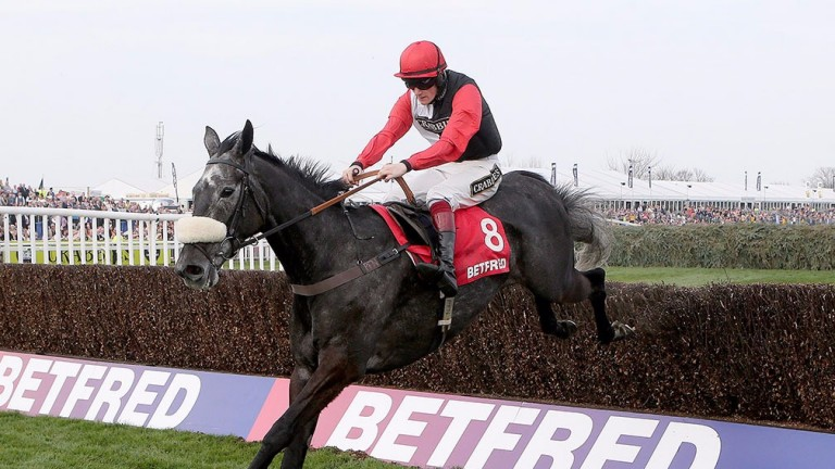 Saphir Du Rheu: trainer Paul Nicholls may have not given up hope