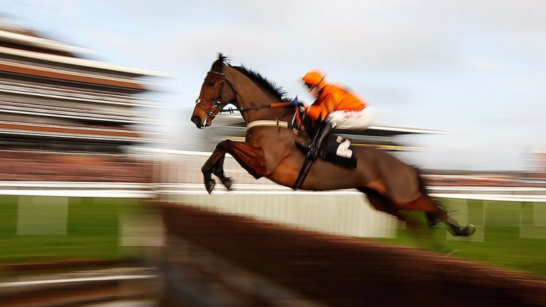 Thistlecrack: a fine example of what Cobhall Court Stud can breed from Kayf Tara