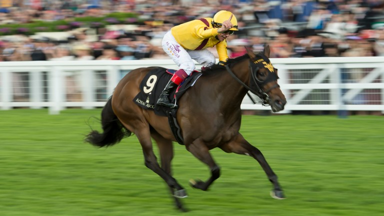 Lady Aurelia's year-end mark of 121 is the highest rating for a filly in Europe since Six Perfections in 2002