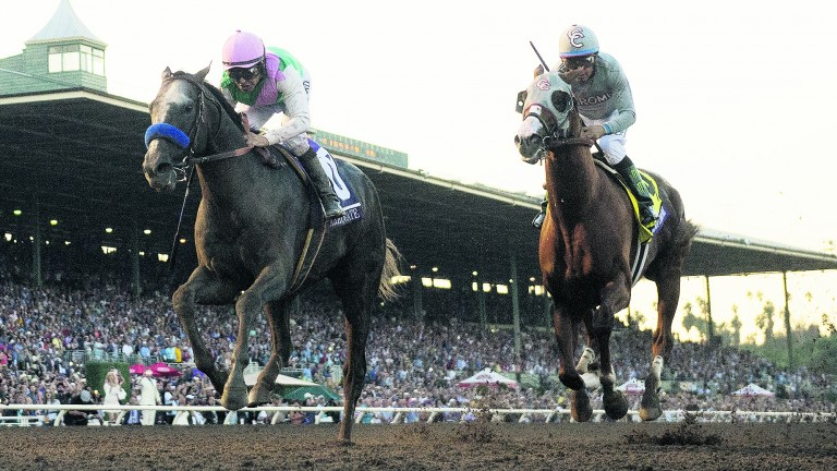Arrogate (left): will have to confirm form with California Chrome (right) if he is to take the Pegasus World Cup