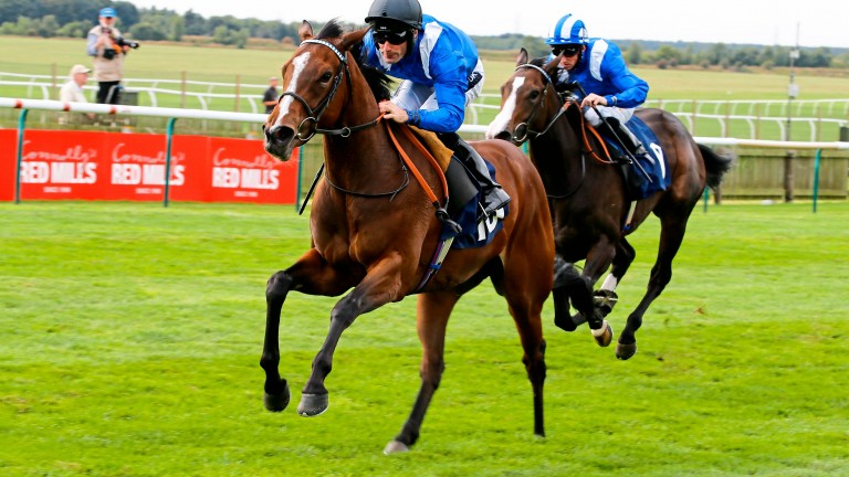 Talaayeb : won well on the Rowley Mile and looks a bright prospect