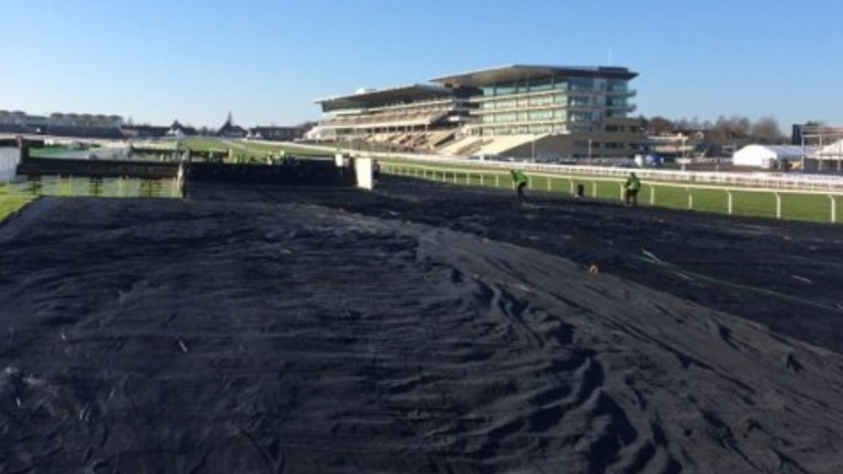 Cheltenham: vulnerable areas of the course are under covers while the rest is under snow