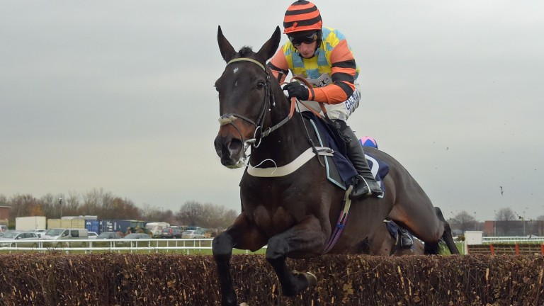 Might Bite: set to go up another 2lb despite his absence since Kempton fall