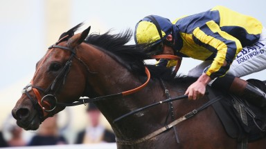 My Dream Boat: wins the Prince of Wales's Stakes at Royal Ascot in June