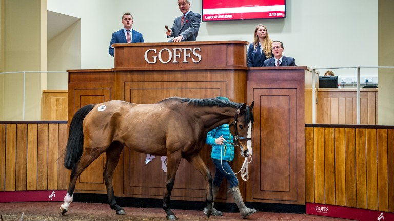 Lot 308: Legacy Gold in the ring before selling to Eamonn Phelan for £100,000