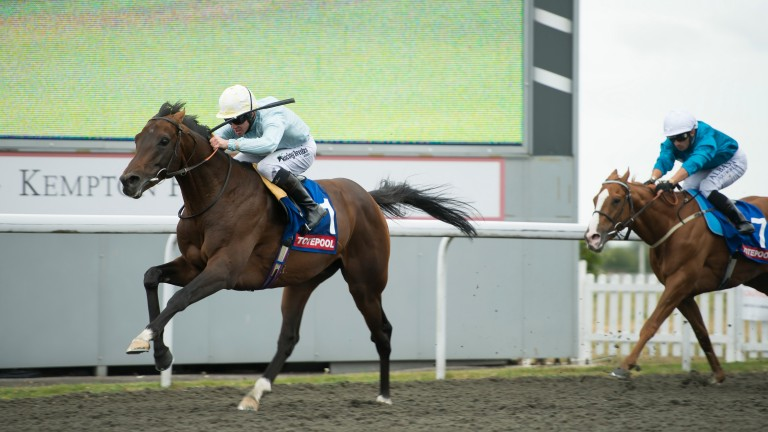 Arab Spring: may run in the Winter Derby Trial next weekend