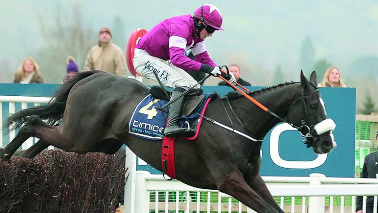 Don Cossack: last year's Cheltenham Gold Cup winner will not have the chance to defend his crown