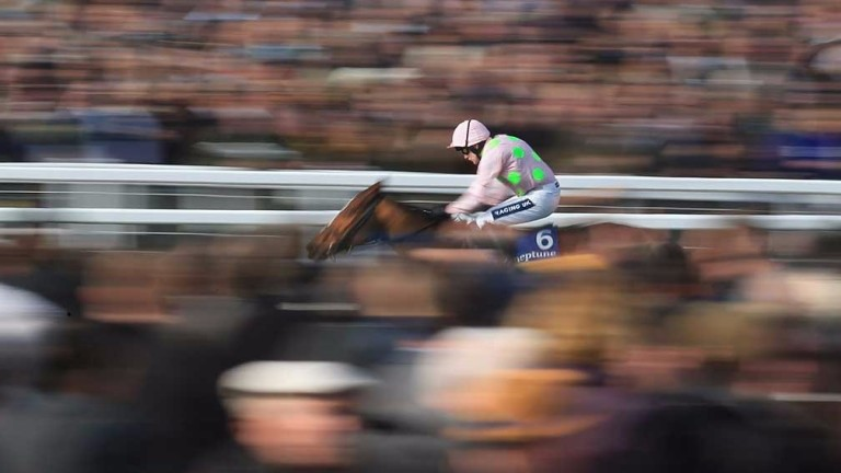 Faugheen and Min to miss Cheltenham
