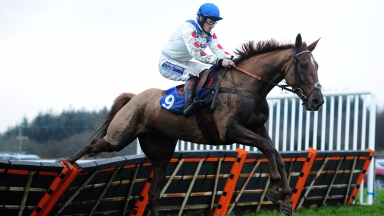 Give Me A Copper - goes on trail for Cheltenham