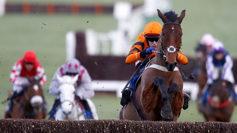 Thistlecrack: still deserves to be Timico Cheltenham Gold Cup favourite according to his trainer Colin Tizzard