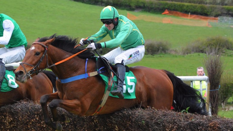 Stay Out Of Court in point-to-point action at Taylorstown last April