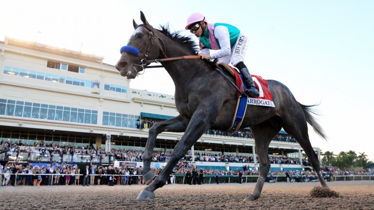 HALLANDALE, FL - JANUARY 28:  Arrogate crosses the finishline to win the $12 Million Pegasus World Cup Invitational at Gulfstream Park on January 28, 2017 in Hallandale, Florida.  (Photo by Mike Ehrmann/Getty Images) ***BESTPIX***