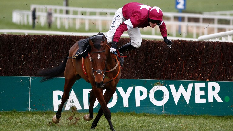DUBLIN, IRELAND - JANUARY 29: David Mullins riding Identity Thief fall during The Frank Ward Solicitors Arkle Novice Steeplechase at Leopardstown racecourse on January 29, 2017 in Dublin, Ireland. (Photo by Alan Crowhurst/Getty Images)