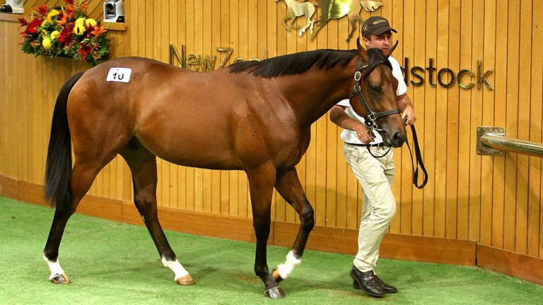 Lot 10: O'Reilly colt out of Volkrose that brought NZ$825,000