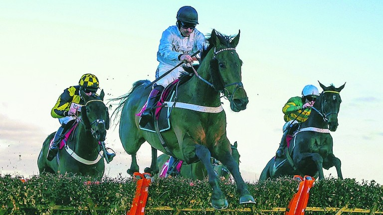 Brain Power: bound for the Contenders Hurdle at Sandown