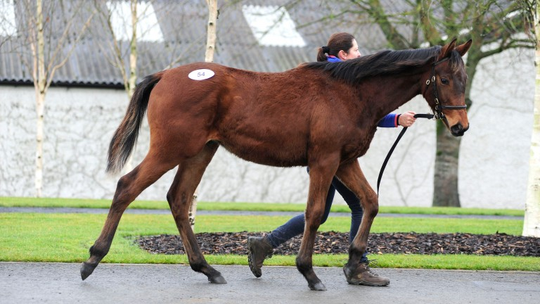 The Shantou colt bought by Ormond Bloodstock for €46,000