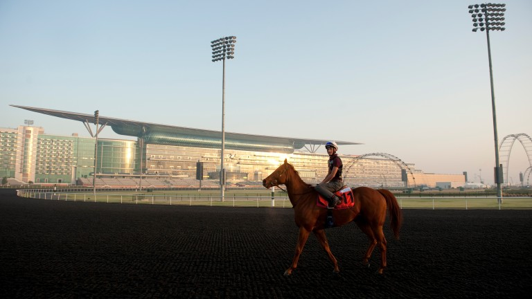 Medicean Man (Harry Bentley) at Meydan racecourseDubai 28.3.13 Pic: Edward Whitaker
