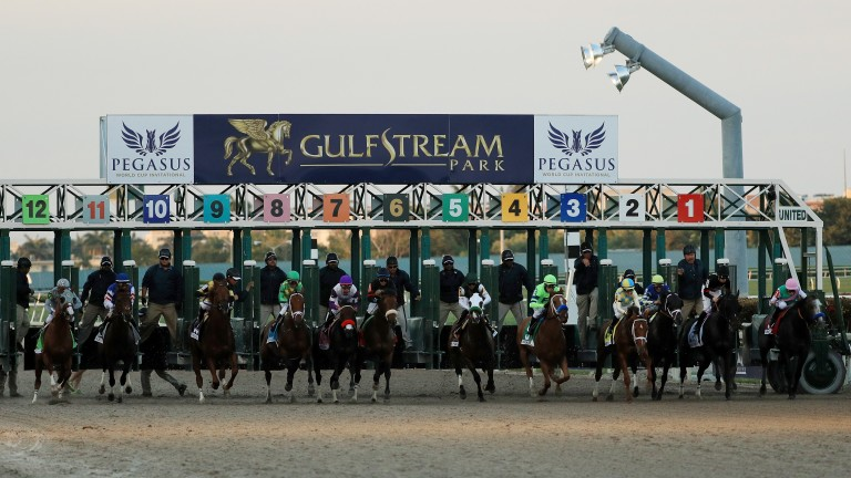 Pegasus World Cup: organisers the Stronach Group are forecasting another full field of 12 will enter the starting gate for the world's richest race, worth $16m at Gulfstream Park next month
