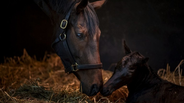 The winning photo for February - Treve and her Dubawi colt