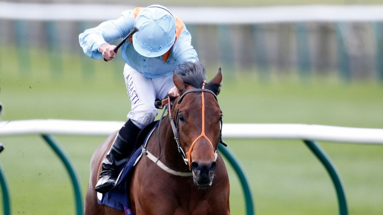 Ventura Storm: St Leger runner-up has joined a training partnership headed by David Hayes
