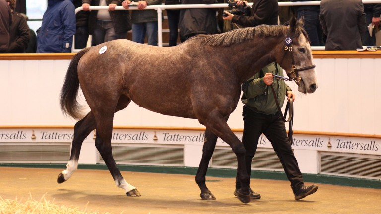 Easton Angel: purchased at Tattersalls in February for a record price of 500,000gns