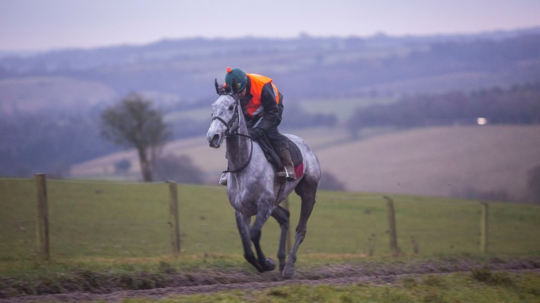 Bristol De Mai prepares for Cheltenham during a workout at home