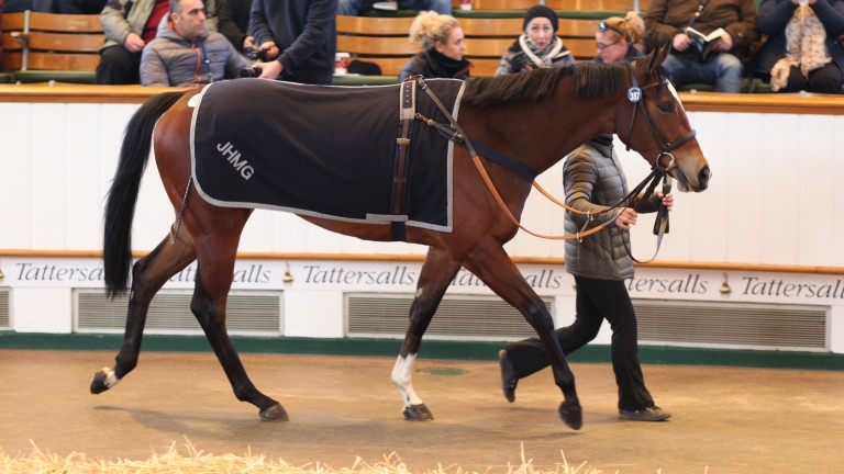 Lot 387: Dream Waltz went the way of the Broadhurst Agency for 105,000gns