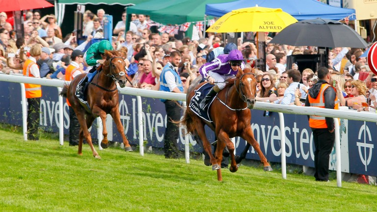 Australia (purple): wins the Epsom Derby in the first part of a Derby double