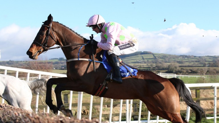 We're all looking forward to Douvan running in the Champion Chase