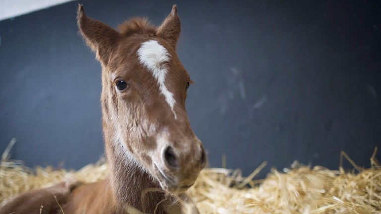 Send your foal pictures with details to bloodstocknews@racingpost.com