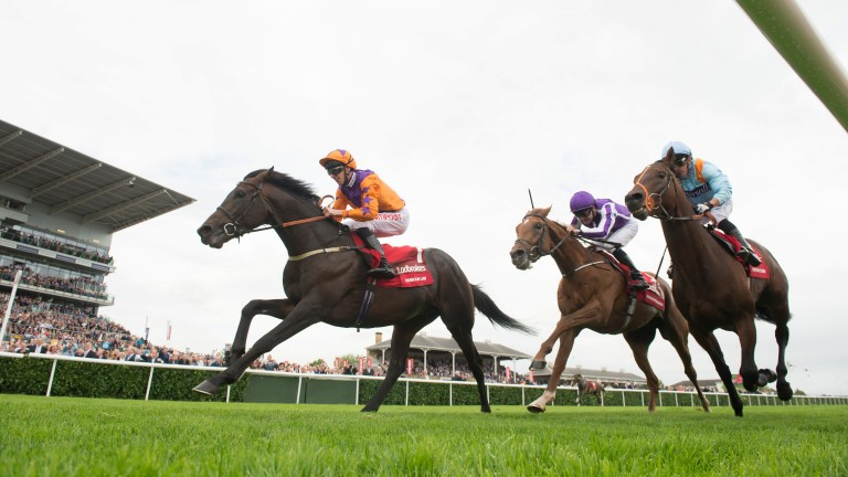 Harbour Law (orange): son of Lawman will welcome a full sibling later this year