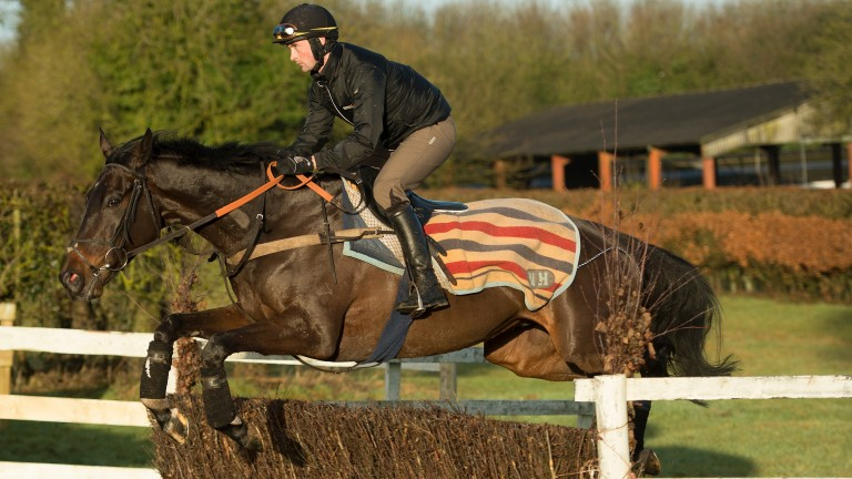 Might Bite: schooled under Nico De Boinville on Tuesday ahead of Doncaster run