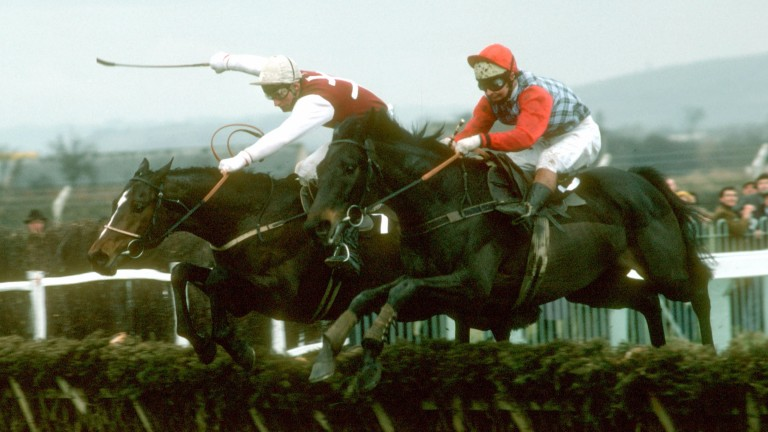 Arch rivals: the winner Monksfield (left) and Sea Pigeon at the last in the 1979 Champion Hurdle
