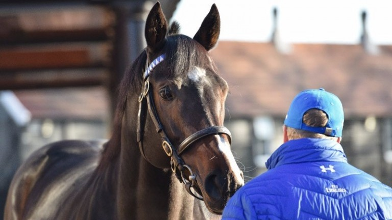 Toormore has been removed from the Darley stallion roster for 2017