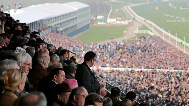 Cheltenham: 70,000 capacity was reached on Gold Cup day last season