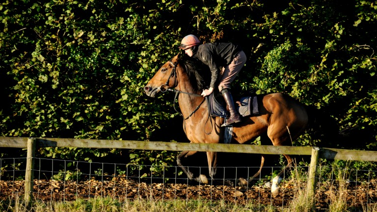 Buywise, who is bidding for his first win in two years, on the gallops at Evan Williams' yard