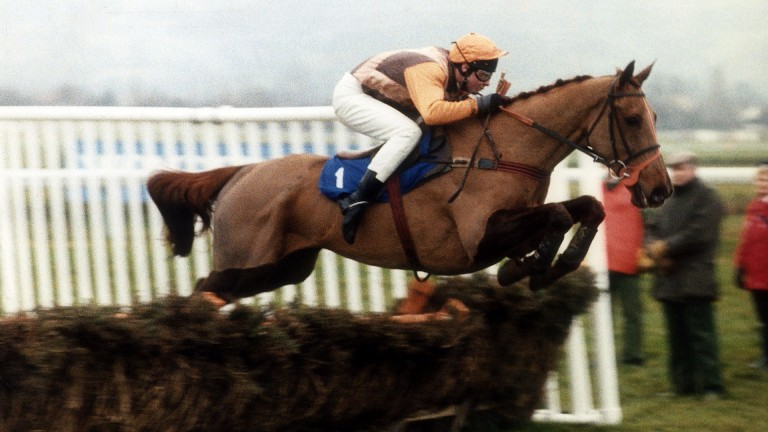 Beech Road: the 1989 Champion Hurdle winner owned by Tony Geake