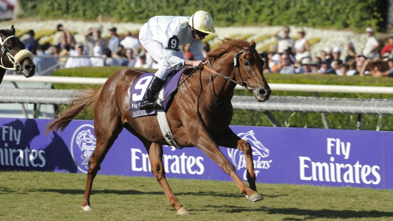 Conduit: dual Breeders' Cup Turf hero stands at Hugh Suffern's Tullyraine Stud in County Down