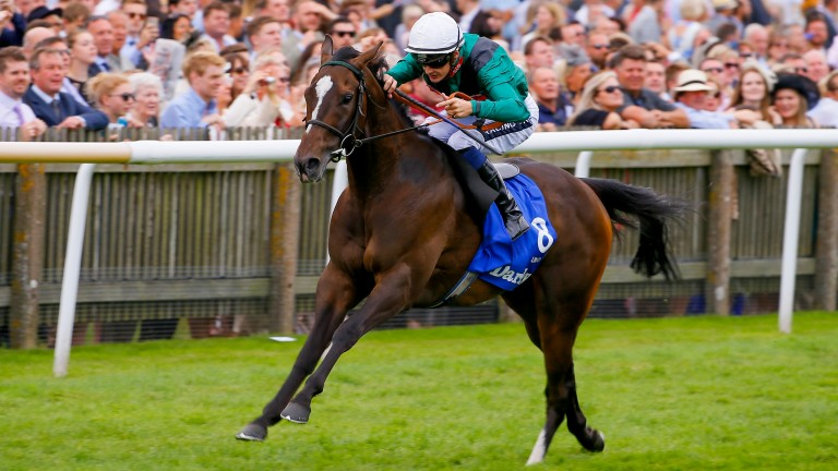 Limato: fourth in the Lockinge Stakes in 2016