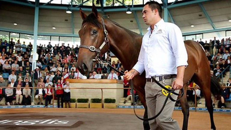 Inglis Classic Sale: aggregate of A$35,653,000 was up 32 per cent year-on-year