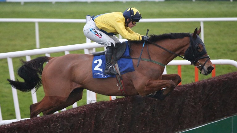 Foxrock: looks for his fourth consecutive victory