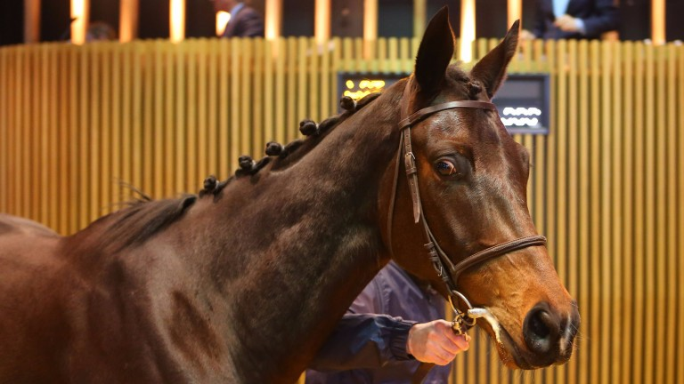 Lot 106: Roi Mage topped the sale when bringing €210,000