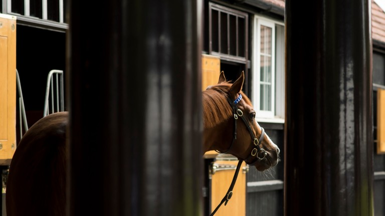 Accessories: has produced two stallions for Darley in Helmet and Epaulette