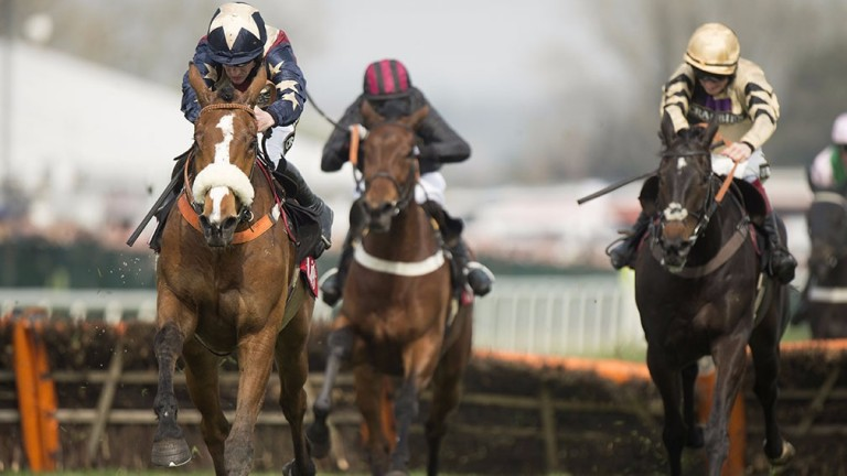 Cyrus Darius: Morebattle contender is 100-1 for the Champion Hurdle