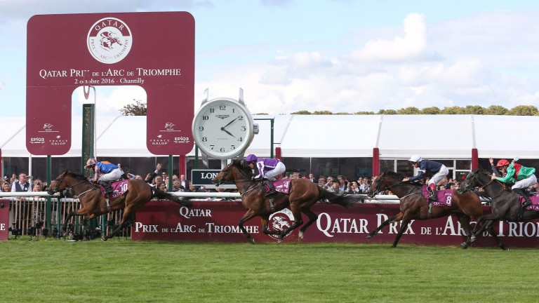 Siljan's Saga (right): ran a cracker to finish fourth to Found in the Prix de l'Arc de Triomphe