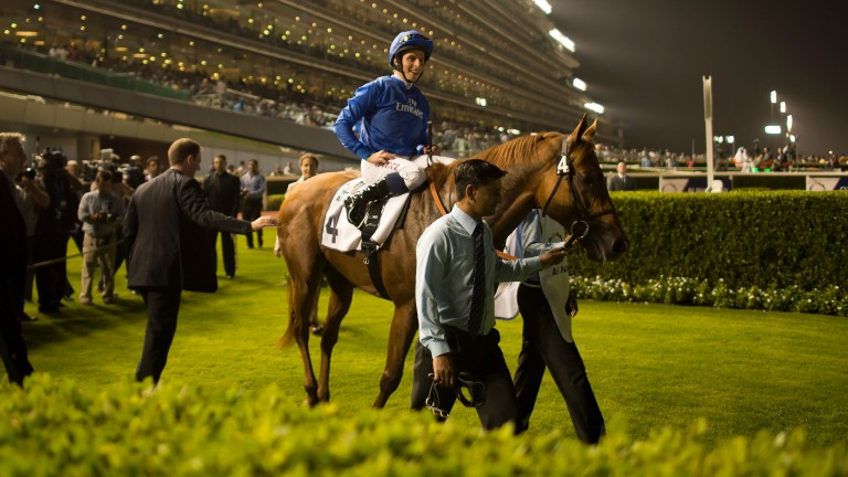 Safety Check landed four Group 2 contests on turf at Meydan